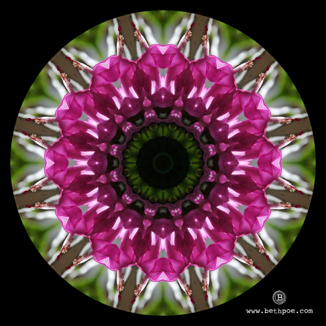Cactus Kaleidoscope.web