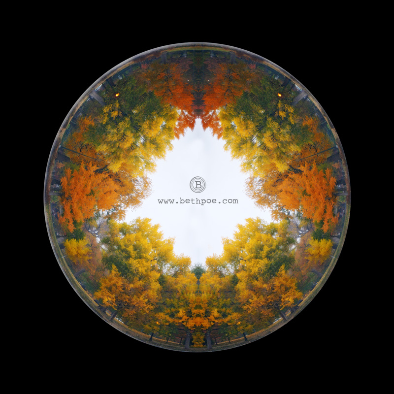 Fall Looking Glass.web